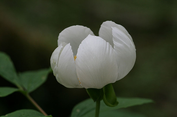Yn013
