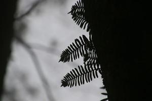 Nximg_4740