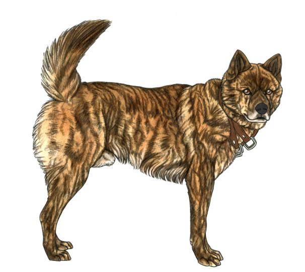 Dog195