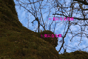 Bjimg_5212