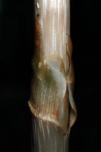 Ap7192252