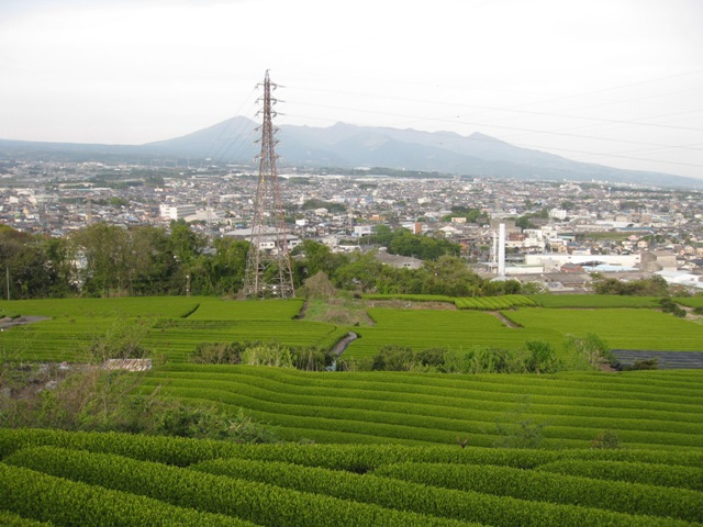 Iwamoto_tya8s