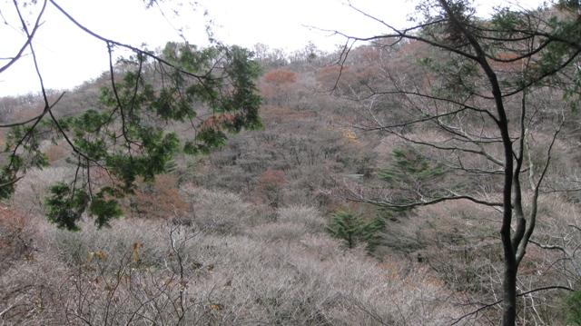 Senzokugawa_1123_11s