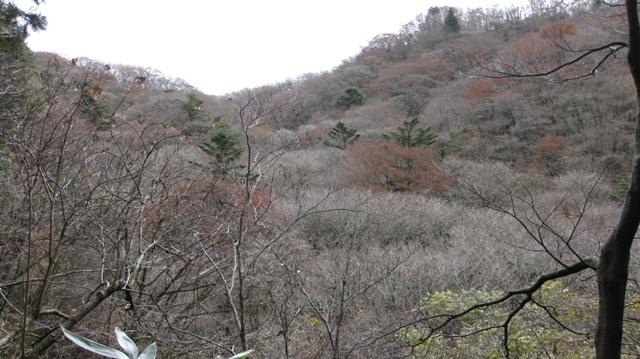 Senzokugawa_1123_12s