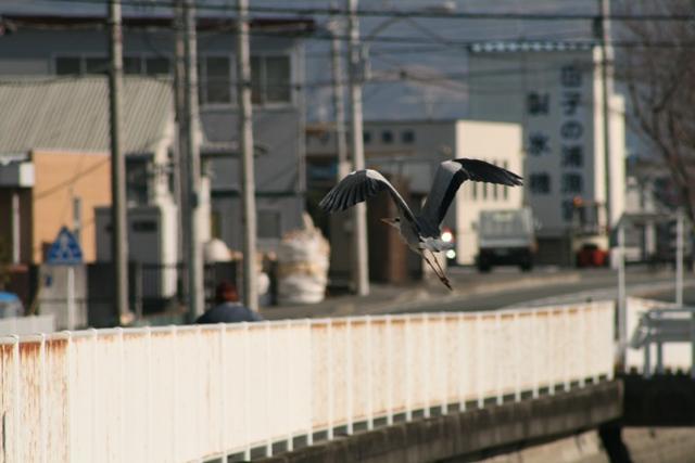 Aosagi_0122_9s