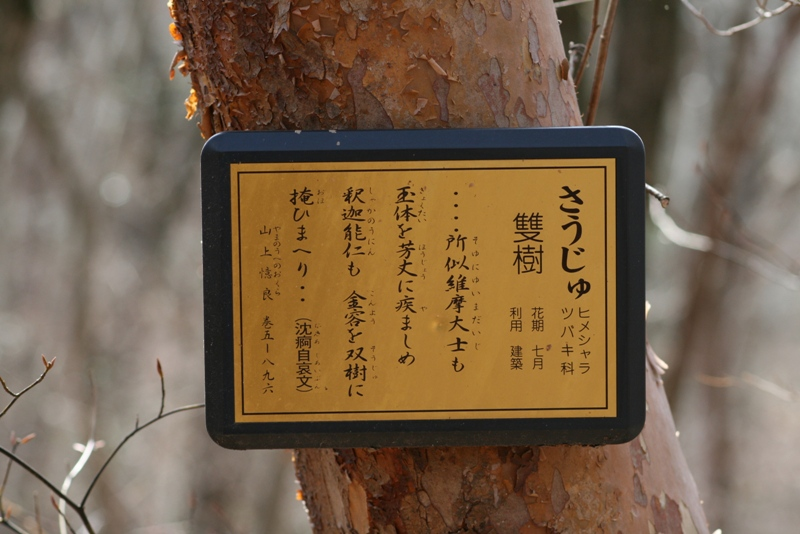 Soujyu_0226_2s