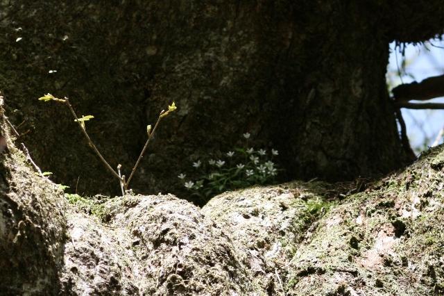Watigaisou_20110514_2s_2