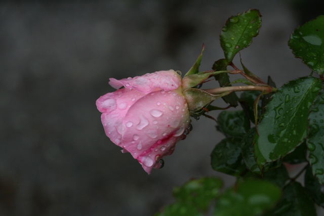 Bara_20110528_1s