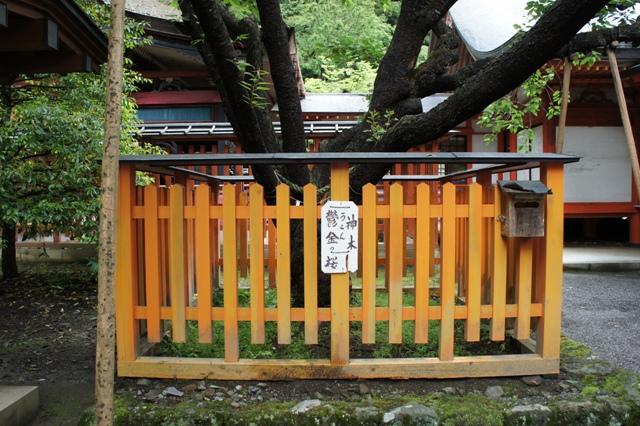 Kanazakura_dsc00837s_2