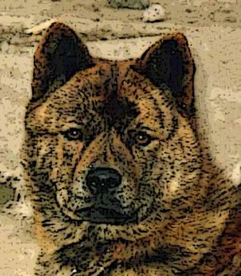Ryuph1